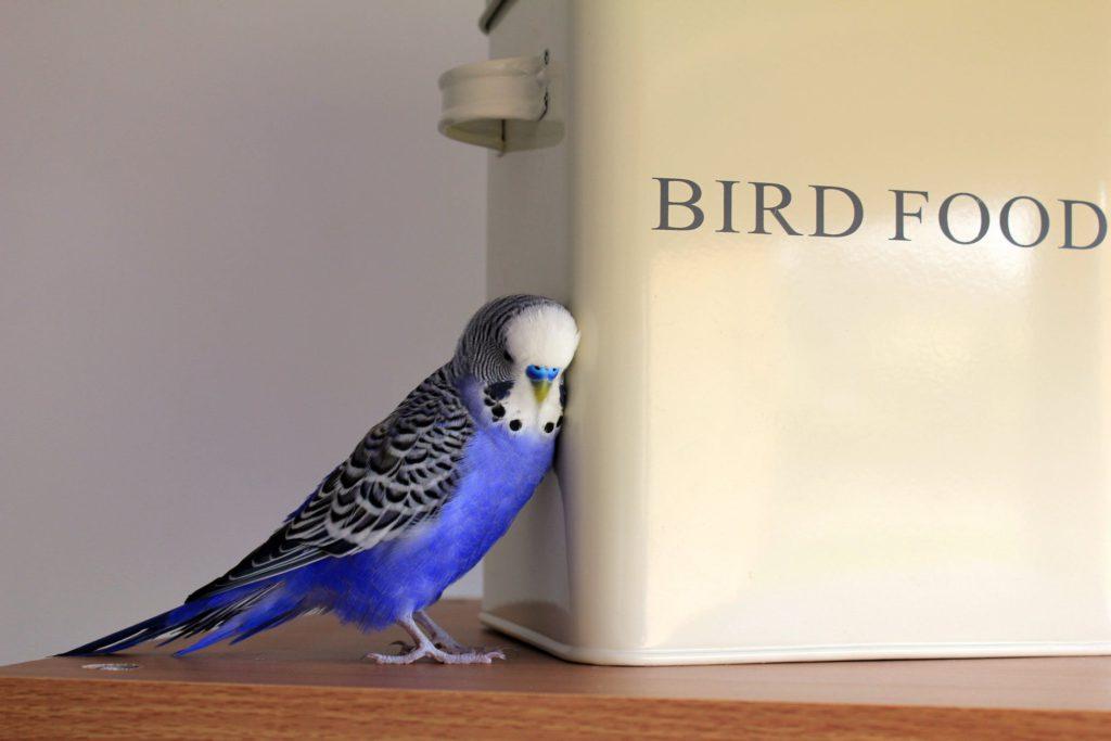 Save on Pet Expenses like Bird Food