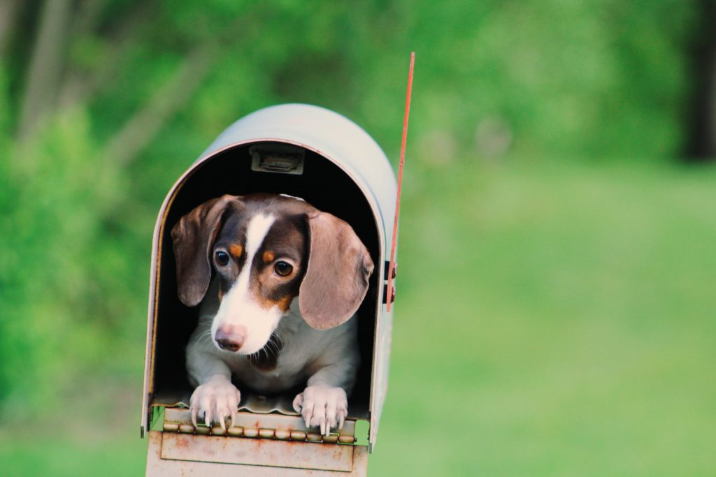 Rehoming a Surrendered Pet Dog