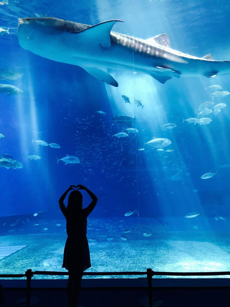 Aquarium Visit Fish - BestRewardsPrograms.com
