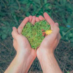 Green Heart Love Nature